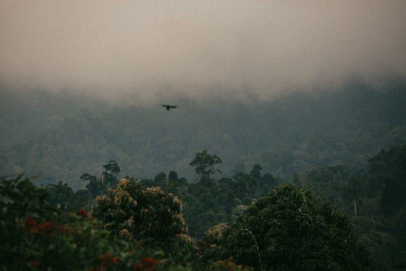 malaysia jungle