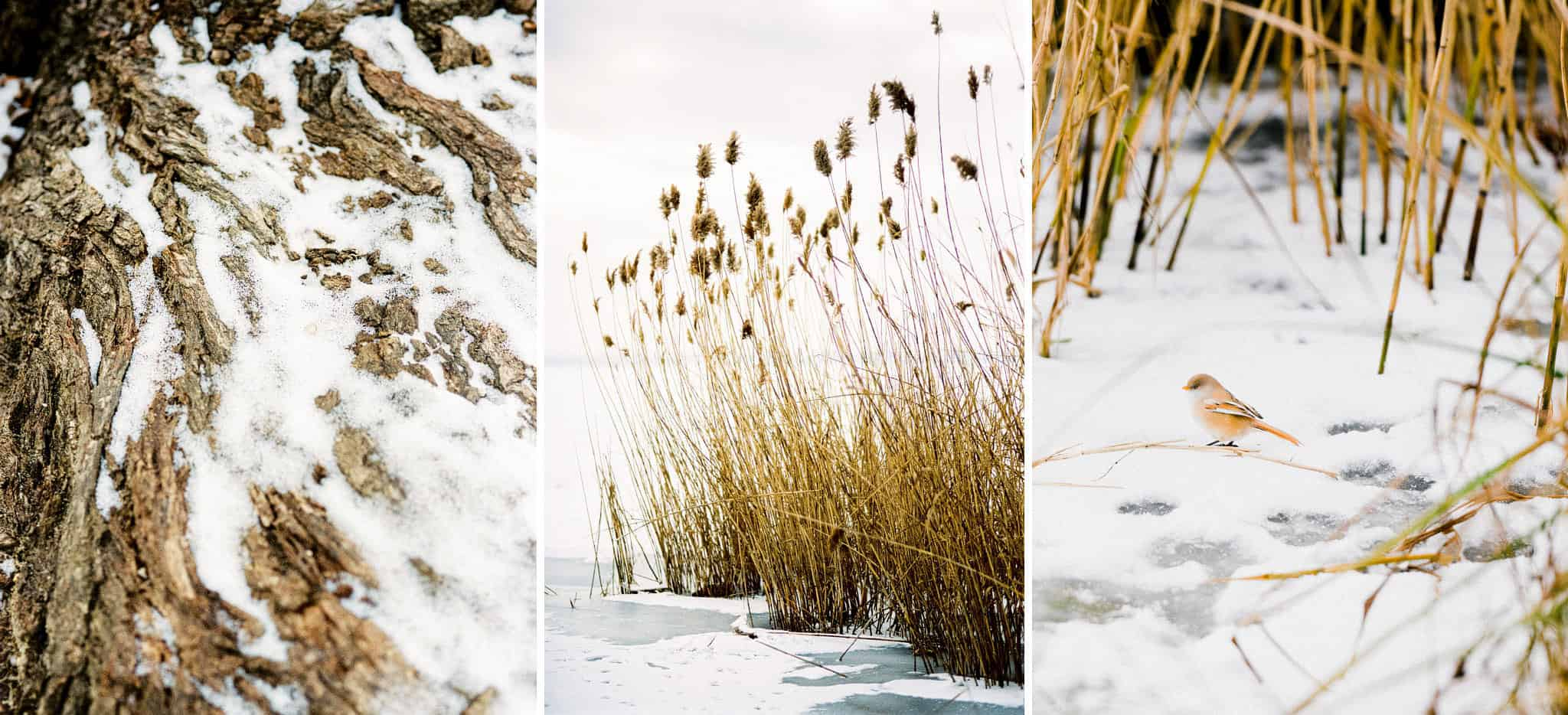 01_wedoverhills_winter_landscape_details