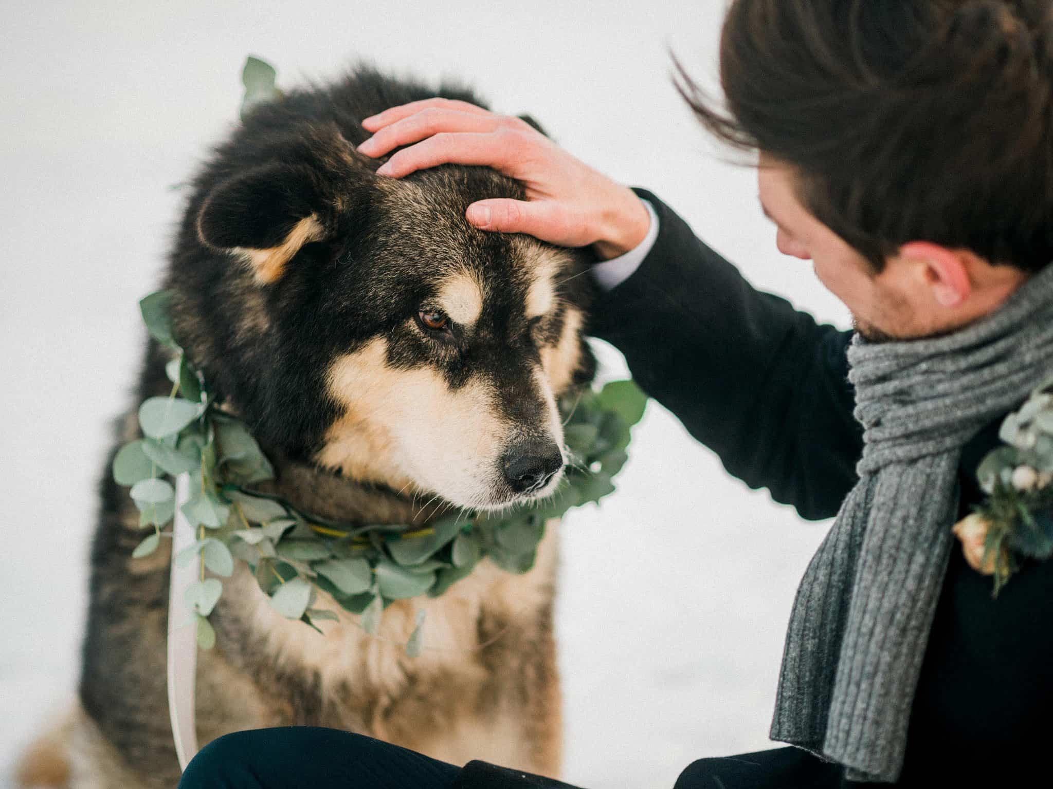 60_wedoverhills_petting_a_malamut